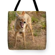 Coyote Caught In A Yawn Tote Bag