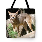 Coyote Grin Tote Bag