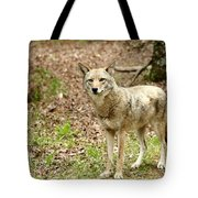 Coyote In Cades Cove Tote Bag
