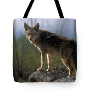 Coyote In Ocotillo Trees Tote Bag