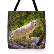 Coyote In The Rocky Mountain National Park Tote Bag