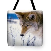 Coyote Listening  For Prey Tote Bag