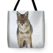 Coyote Looking At Me Tote Bag