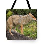 Coyote On A Log Closeup Tote Bag