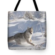 Coyote On The Move Tote Bag