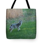 Coyote Stance  Tote Bag