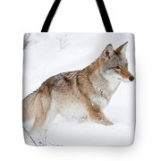 Coyote Winter Tote Bag