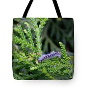 Crawlly Caterpillar Tote Bag