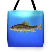 Creek Chubsucker Blue Lagoon  Tote Bag