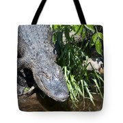 Creeping Up On You Tote Bag