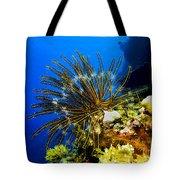 Crinoid At Pakin Atoll2 Tote Bag