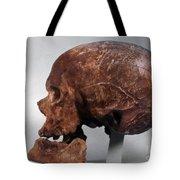 Cro-magnon Skull Tote Bag