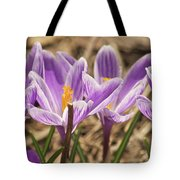 Crocuses 2 Tote Bag