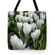 Crocuses 5 Tote Bag