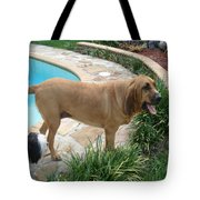 Cujo And Lucky By The Pool Tote Bag