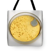 Culture Plate Of Penicillium Mold Tote Bag