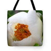 Cupping Beauty  Tote Bag