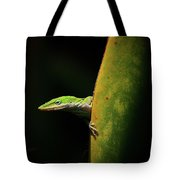 Curious Anole Tote Bag