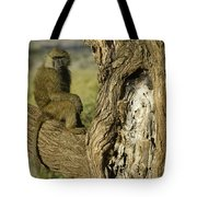 Curious Baboon Tote Bag