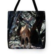 Curious Bambi Tote Bag
