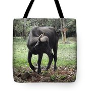 Curious Buffalo Tote Bag