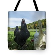 Curious Chicken Tote Bag