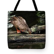 Curious Duck Tote Bag