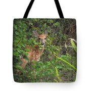 Curious Fawn Tote Bag
