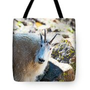 Curious Goat On The Mount Massive Summit Tote Bag