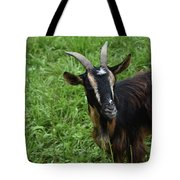 Curious Goat With Very Long Shaggy Fur Tote Bag