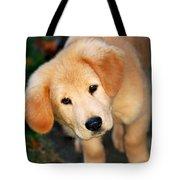 Curious Golden Retriever Pup Tote Bag