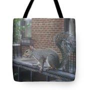 Curious Gray Squirrel  Tote Bag