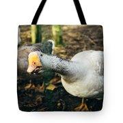 Curious Grey Goose Tote Bag