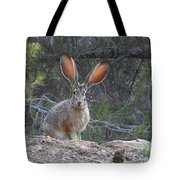 Curious Jack Tote Bag