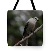 Curious Jay Tote Bag