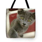 Curious Kitten Tote Bag