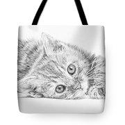 Curious Kitten Tote Bag