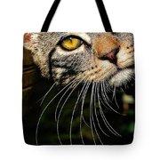Curious Kitten Tote Bag by Meirion Matthias
