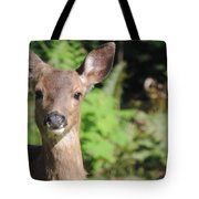 Curious Little Deer Tote Bag