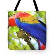 Curious Macaw Tote Bag