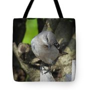 Curious Mockingbird Tote Bag