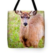Curious Mule Deer Frolicking On A Colorado Spring Afternoon Tote Bag