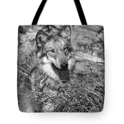 Curious Wolf Pup Tote Bag