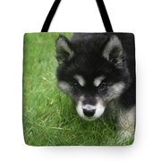 Curiousity Filled Look In The Face Of An Alusky Tote Bag
