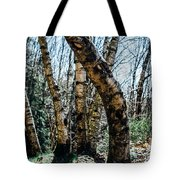 Curved Birch Tree Tote Bag