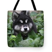 Cute Alusky Puppy In A Bunch Of Plant Foliage Tote Bag