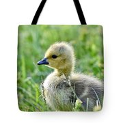 Cute Baby Goose In A Grass Field Tote Bag