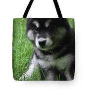 Cute Fluffy Alusky Puppy Sitting Up In A Yard Tote Bag