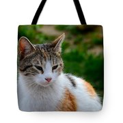 Cute Grey White And Orange Cat Poses And Gazes Tote Bag