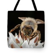 Cute Honey Bee 2 Tote Bag by Brian Hale